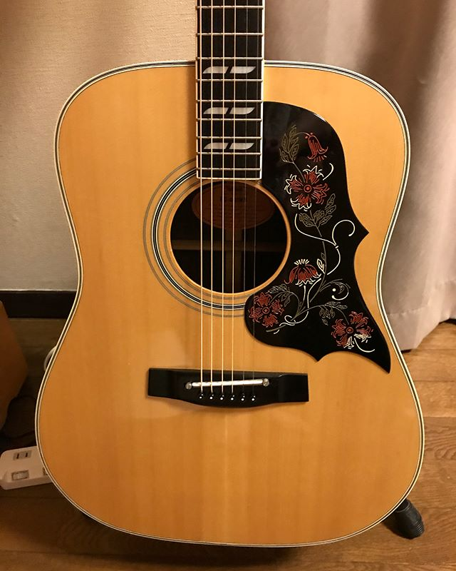 78-80年に製造されたヤマハのアコギが仲間入り!この頃のヤマハは安くて物も良いものが多いらしい! #yamaha #guitar #アコギ #アコギ初心者 #アコースティックギター #ヤマハ #ギター